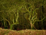 Clent Hill (4)